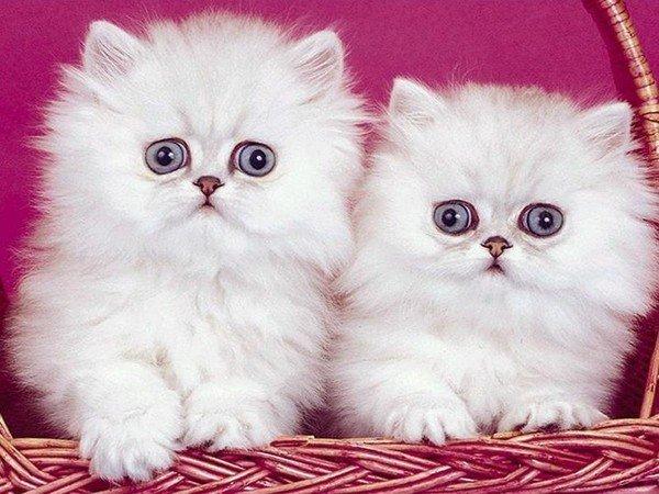 katten15