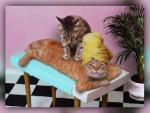 katten humor400000