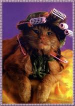 katten humor2000000