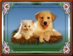 Hond&Kat202020