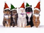 kerst/dieren22