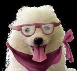 Honden humor40404040