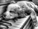 dieren muziek200000