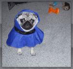 honden humor
