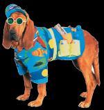 Hondenhumor50000