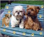 honden/lief0000000