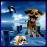 honden7