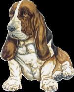 Honden/lief03030