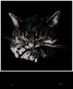 Welterusten/dieren1145444687