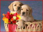 honden/lief3000000
