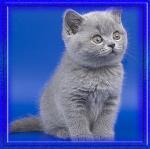 katten/lief4040
