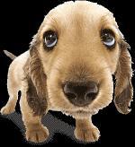 honden/lief999