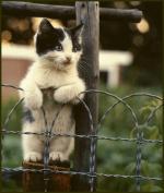 katten/lief40000