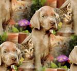 Hond&kat200000