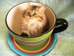 Katten/lief0040