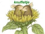 knuffel455