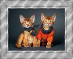 katten/lief300000