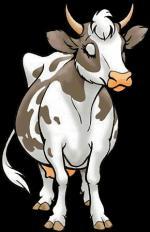 Koeien11