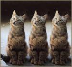 katten humor444