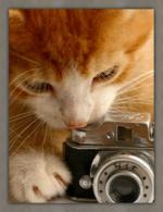 Katten humor10