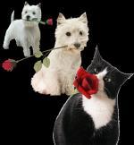 Hond&kat29393993