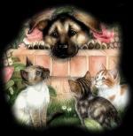 Hond&kat20000