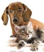 hond&kat29999