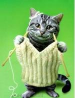 katten humor888