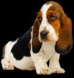 Honden/lief300000