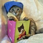 katten humor999999