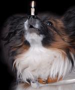 Honden humor8