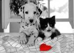 Hond&kat030304