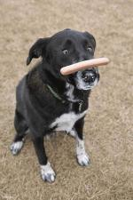honden humor999