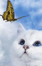 Katten/lief989898
