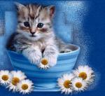katten/lief88888