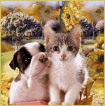 hond&kat0000