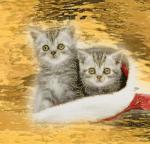 kerst/dieren00000