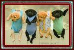 Honden humor909090