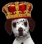 honden humor400000