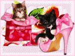 katten/lief400