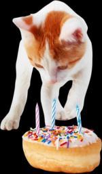 verjaardag   dieren000