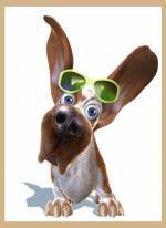 Honden humor444