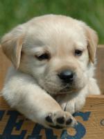 honden /lief30000