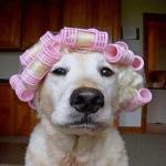 Honden humor9999