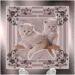 katten/lief30000