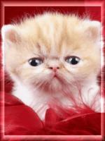 Katten/lief9445