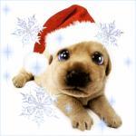 kerst/dieren2000000
