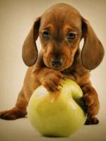 honden /lief999