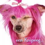 Honden humor40000