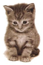 katten/lief999